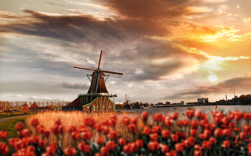 Dutch windmills with red tulips close the Amsterdam, Holland, Holandia