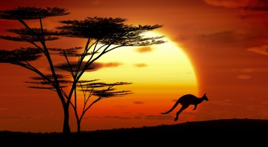 A jumping kangoroo at sunset in Australia