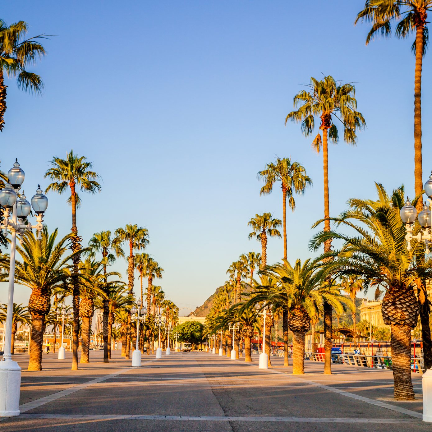 Avenue with palm trees in Barcelona. Spain