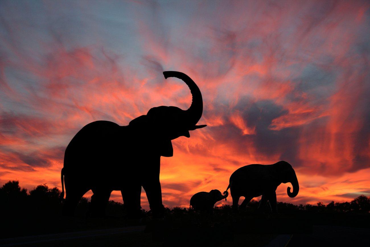 Indie-slonie-zachod-Depositphotos_8900053_original-1300x867px