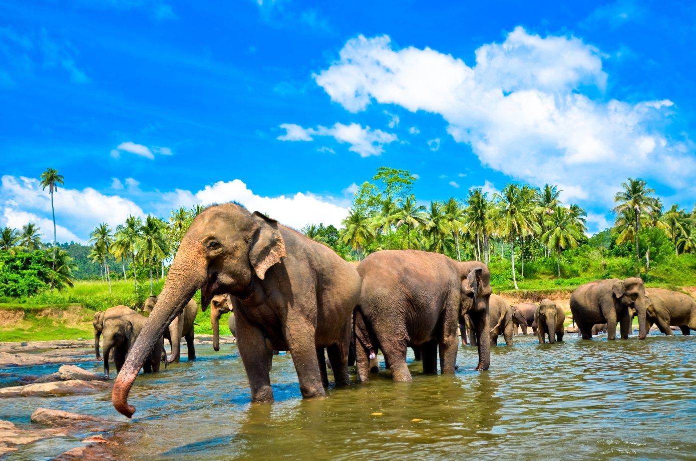 Sri-lanka-slonie-Depositphotos_32883393_original-1390x921px