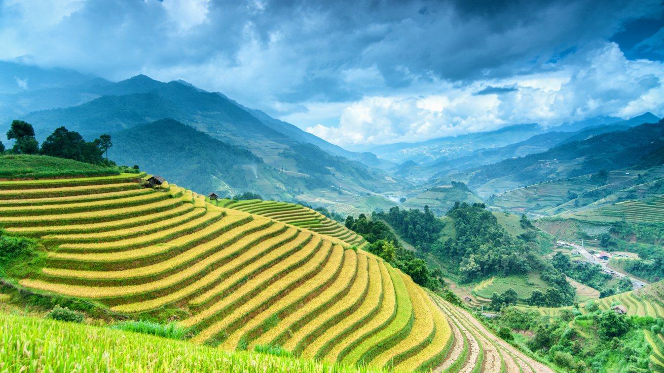 Wietnam Wietnam-tarasy-zielone-Depositphotos_82294692_original-1310x737px