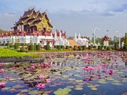 chiang mai Chiangmai royal pavilion with lotus flower.