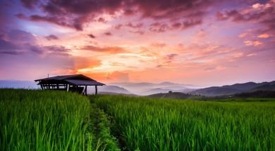 chiang mai chiang-mai-widok-pole-zielone-kolory-Depositphotos_37285425_original-1000x667px