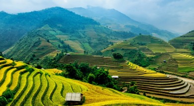 wietnam wietnam-pola-ryzowe-widoczek-Depositphotos_83209982_original-1000x664px