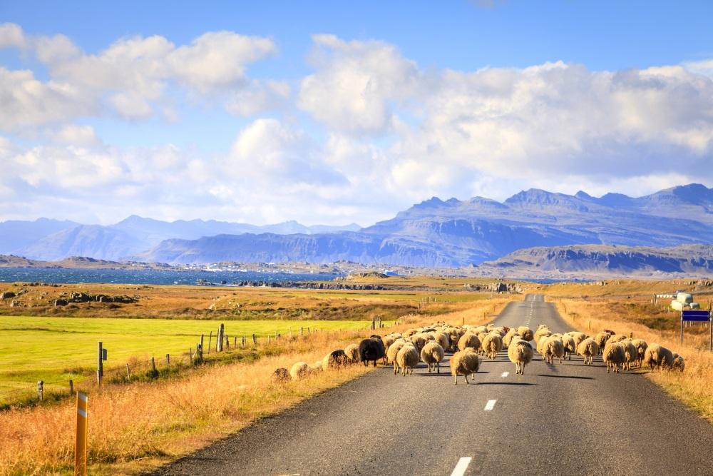 Super! Islandia w wakacje w dobrej cenie (+inne terminy!)