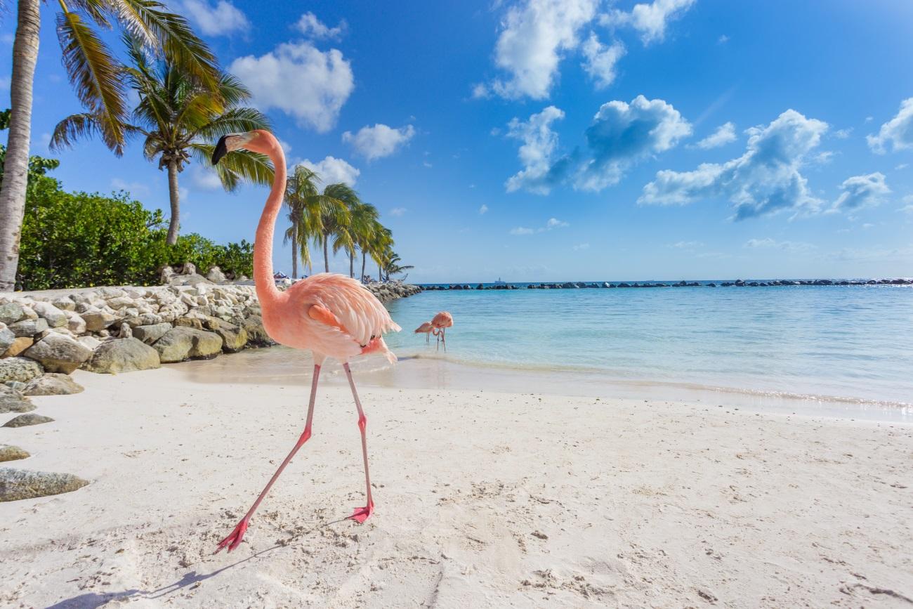 PRZEGLĄD PROMOCJI: oferta KLM na rajskie wyspy