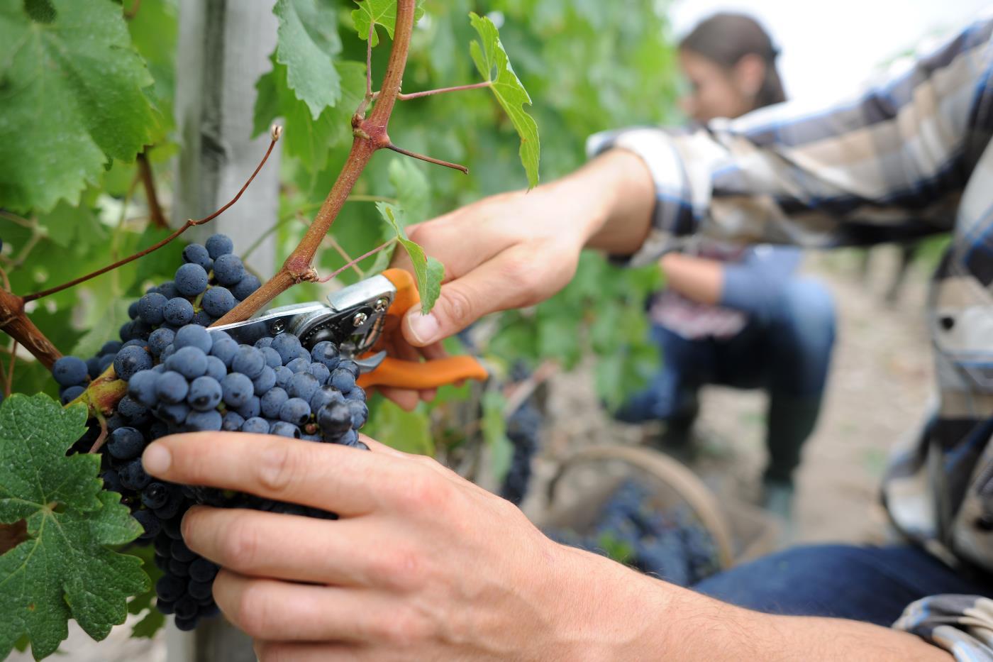 Francuskie Bordeaux w dobrej cenie – bezpośrednio z Polski